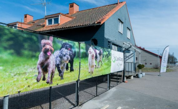 Invigning Care for dogs